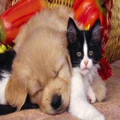 Алмазная мозаика Котенок и щенок, на подрамнике - размер 20*20